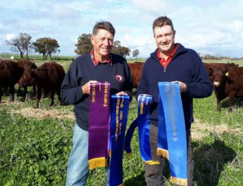Red Poll Breeders Dominate 2019-2020 Carcase Competition